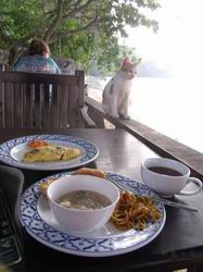 朝食を狙う猫